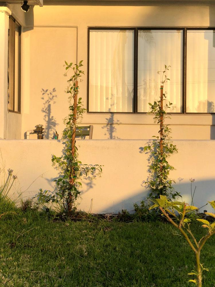 drought resistant lawn 1