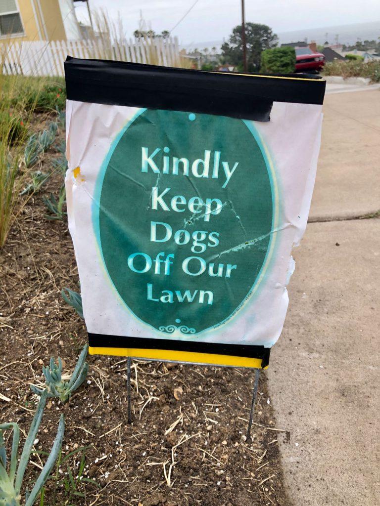 drought resistant lawn 13