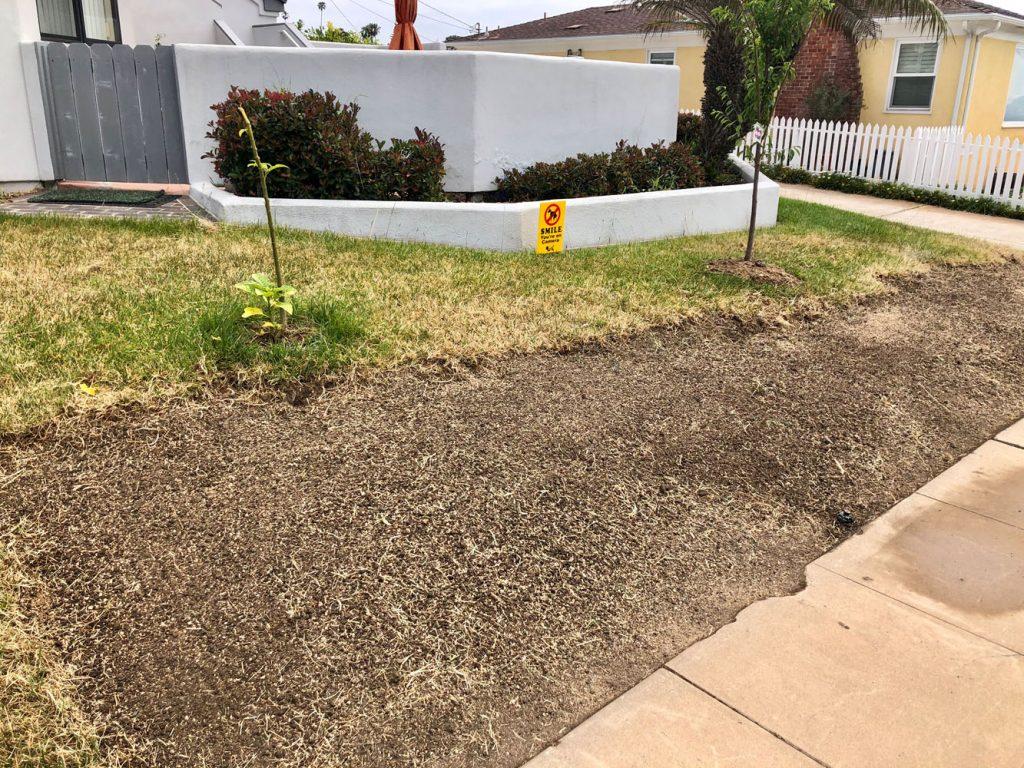drought resistant lawn 2