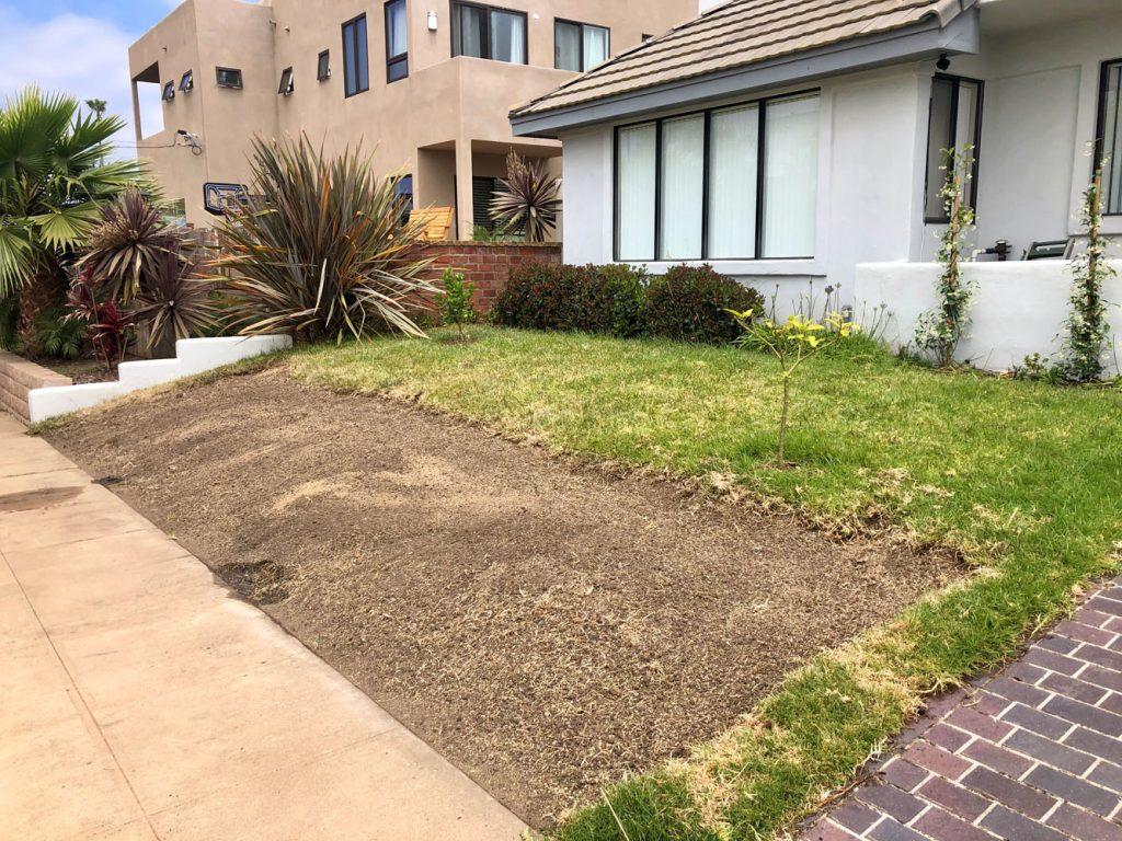 drought resistant lawn 3