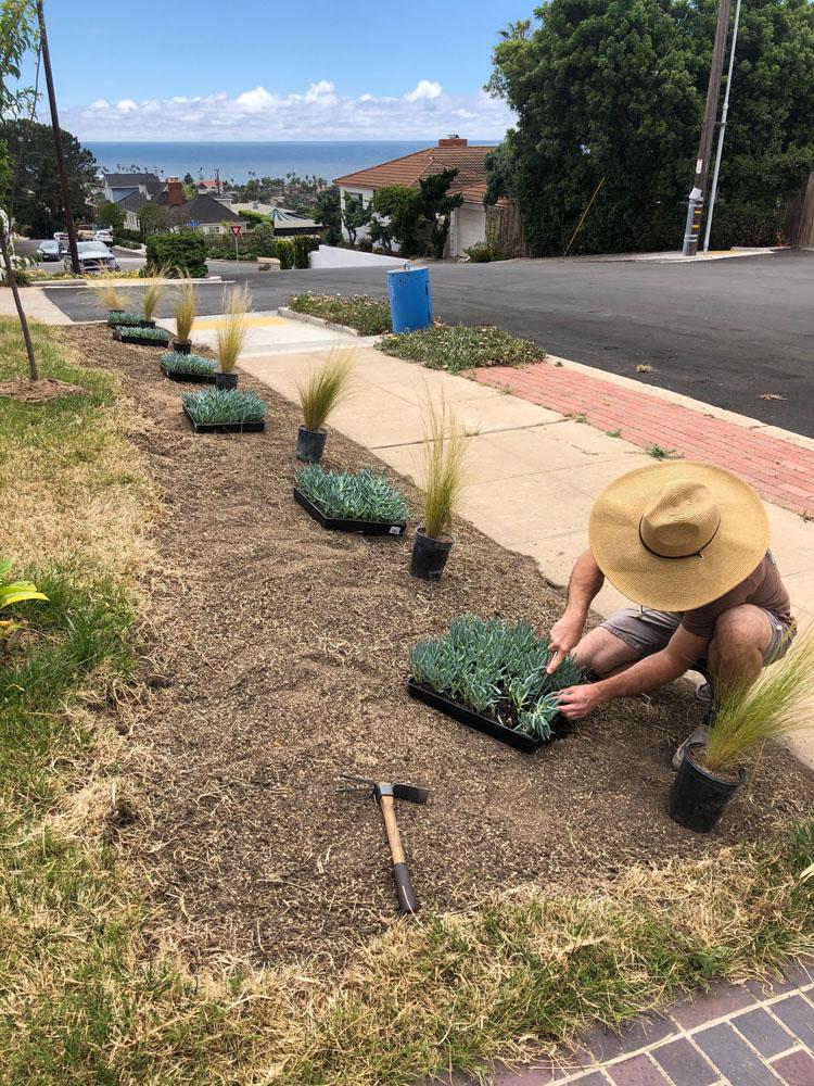 drought resistant lawn 5