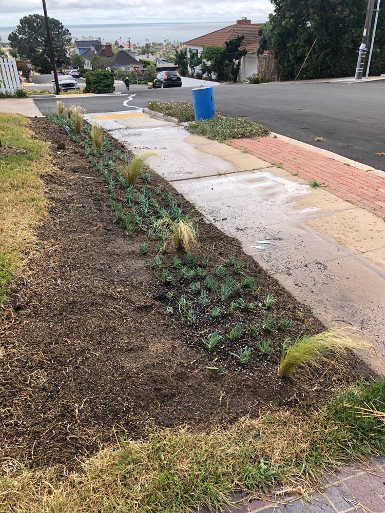 drought resistant lawn 6
