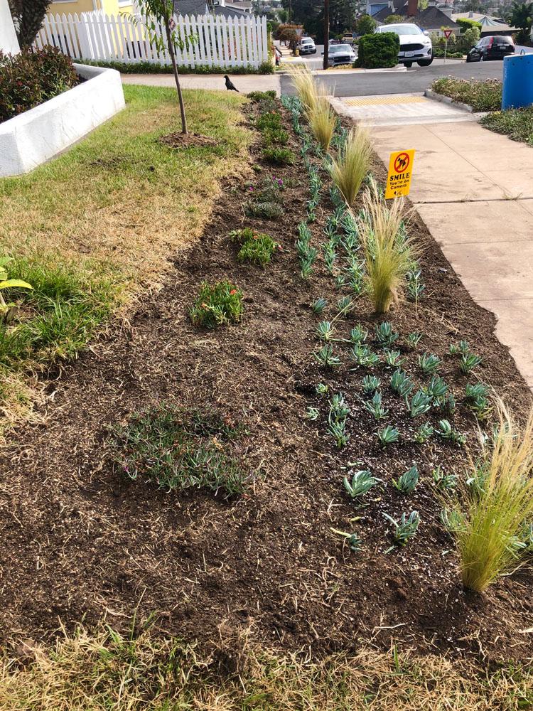 drought resistant lawn 8